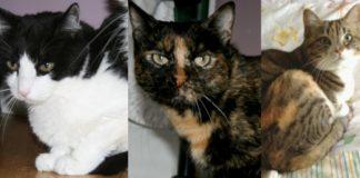 Tre amici da adottare. Banny, Birba, Buffy cercano casa