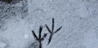 Meteo Brianza 14 15 dicembre