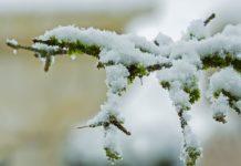 Neve in Brianza