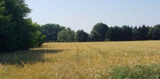 Meteo Brianza 19 luglio Monza